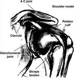 Chronic Shoulder Instability