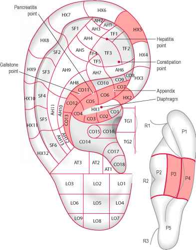 Laser auriculo diagnostic auricular acupuncture doctor steve abel acupuncture for gallstones fandeluxe Images