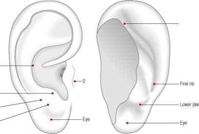 Trigeminal neuralgia on the auricular acupuncture lumbar vertebrae fandeluxe Images