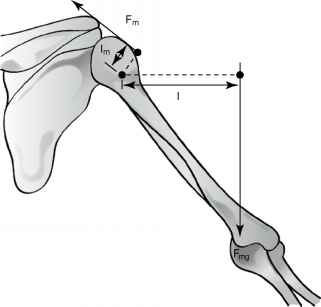 Lever Shoulder Joint