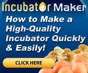 How to Make a High-Quality Incubator
