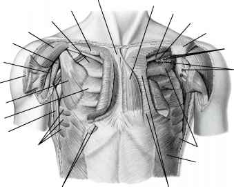 Pectoralis Trigger Points