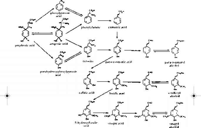 Coumaryl Alcohol Biosynthesis