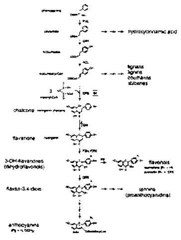 Anthocyanins And Anthocyanidins