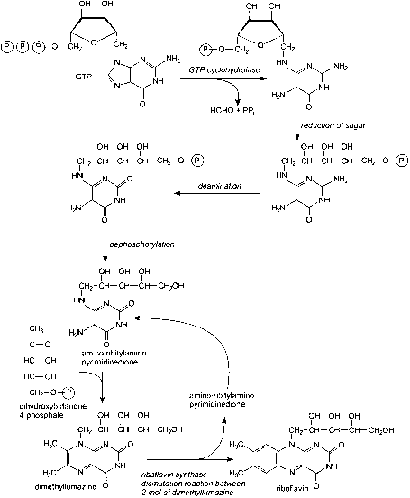 Riboflavin Methylene Reductase Mechanism