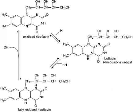 Riboflavin Lumiflavin Reactions